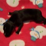 Pup 1, girl