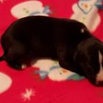 Pup 4, girl