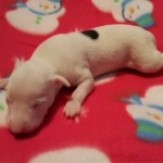 Pup 5, girl