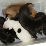 """Eleven days old, and getting too big for the """"warming box"""" we used to put them in when changing the bedding"""