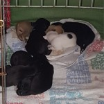 Seven little angels, all settled into their new bed