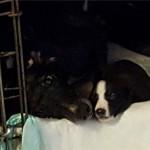 Mama and son: Tutu and Pup 2