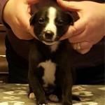 Pup 2, boy