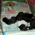 They are all fat and getting sassy! One more snoozing pup pic. Can't have too many!