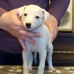 Dottie at 5 weeks