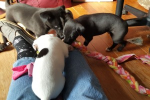 Boomer, Una, and Dottie sharing a tug