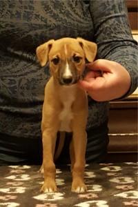 Rex at 6 weeks