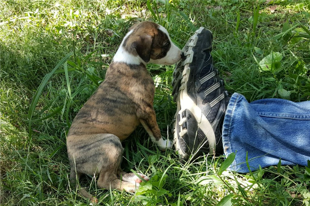 """Clark: """"Dad, where have you been with this shoe?"""" 9/05/16"""