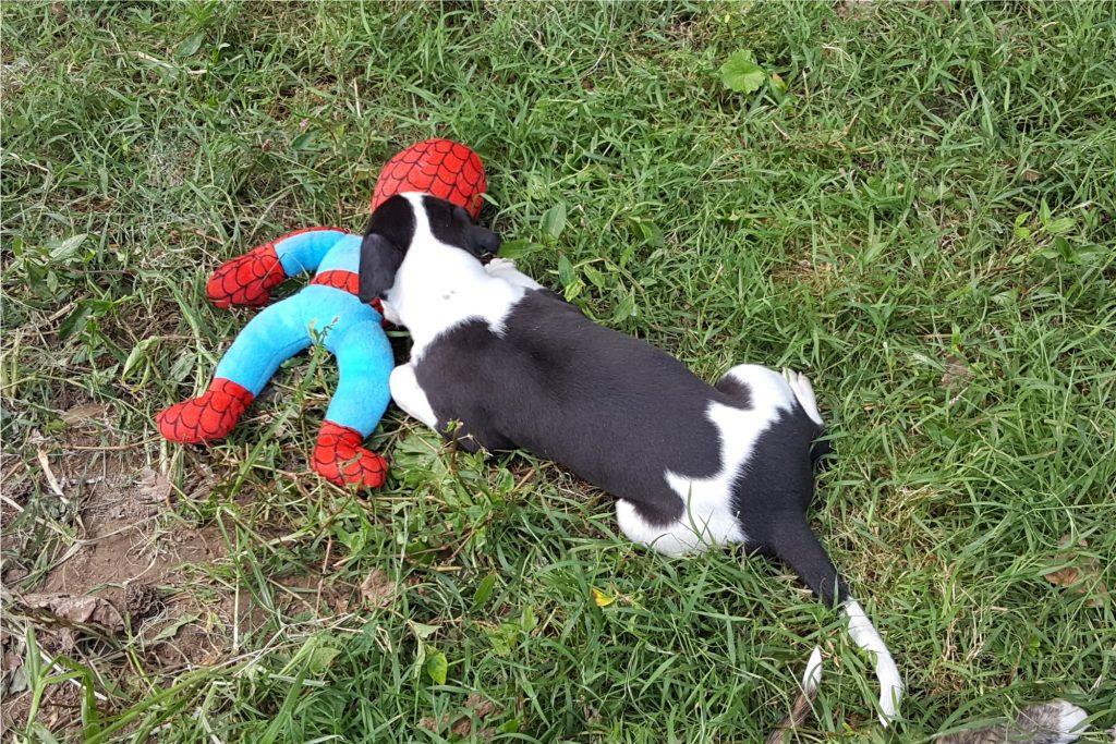 Batman vs. Spiderman! 9/05/16
