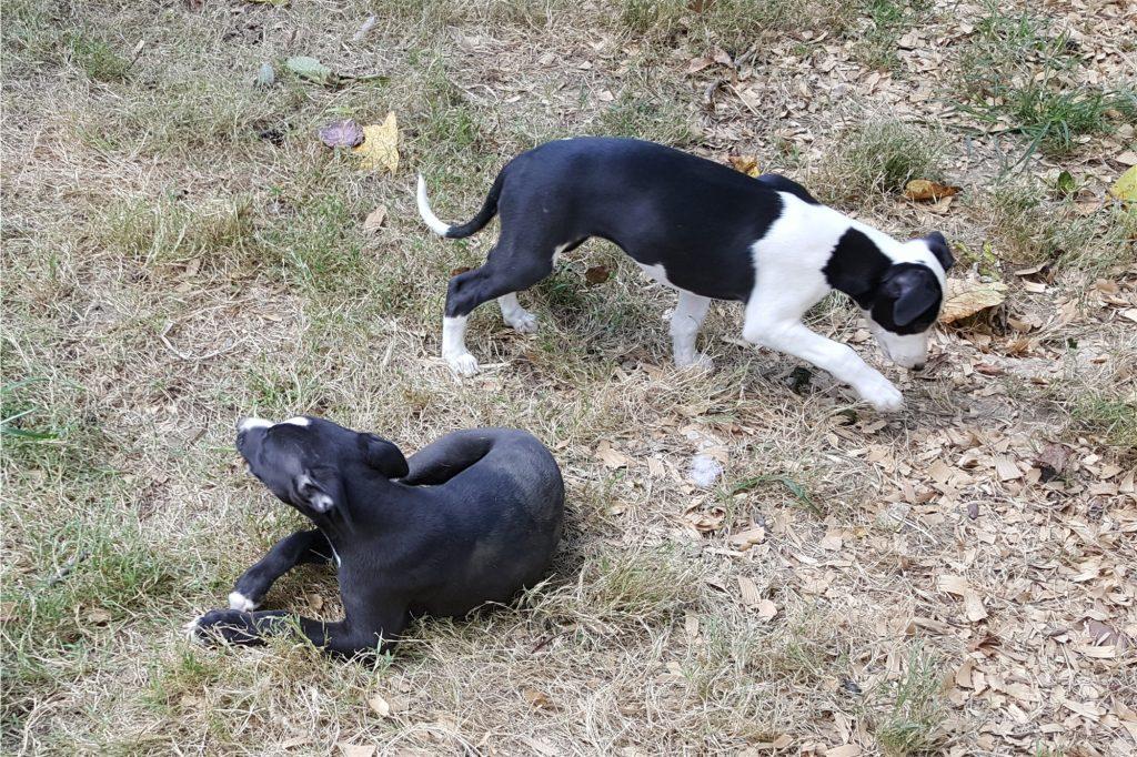 Cappy & Mystique, exploring the yard -