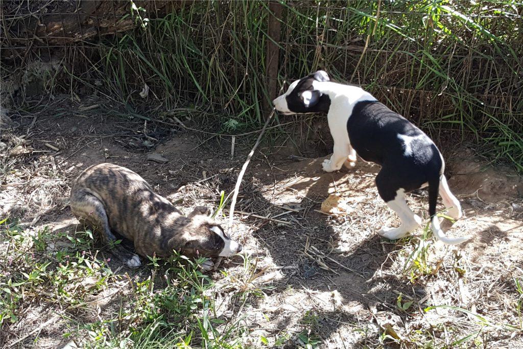 Kara and Storm sharing a nice stick.