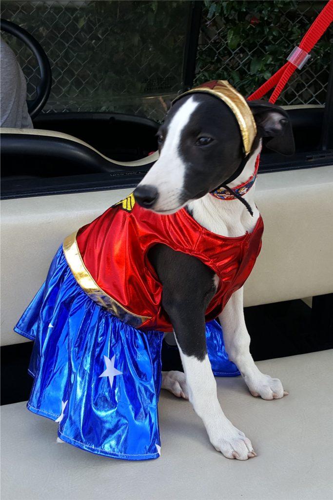 Cutest little Wonder Woman dressed as .... yep.... Wonder Woman!