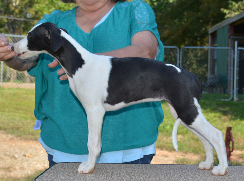 Storm is looking for the right home, hopefully where she will get to compete at something!