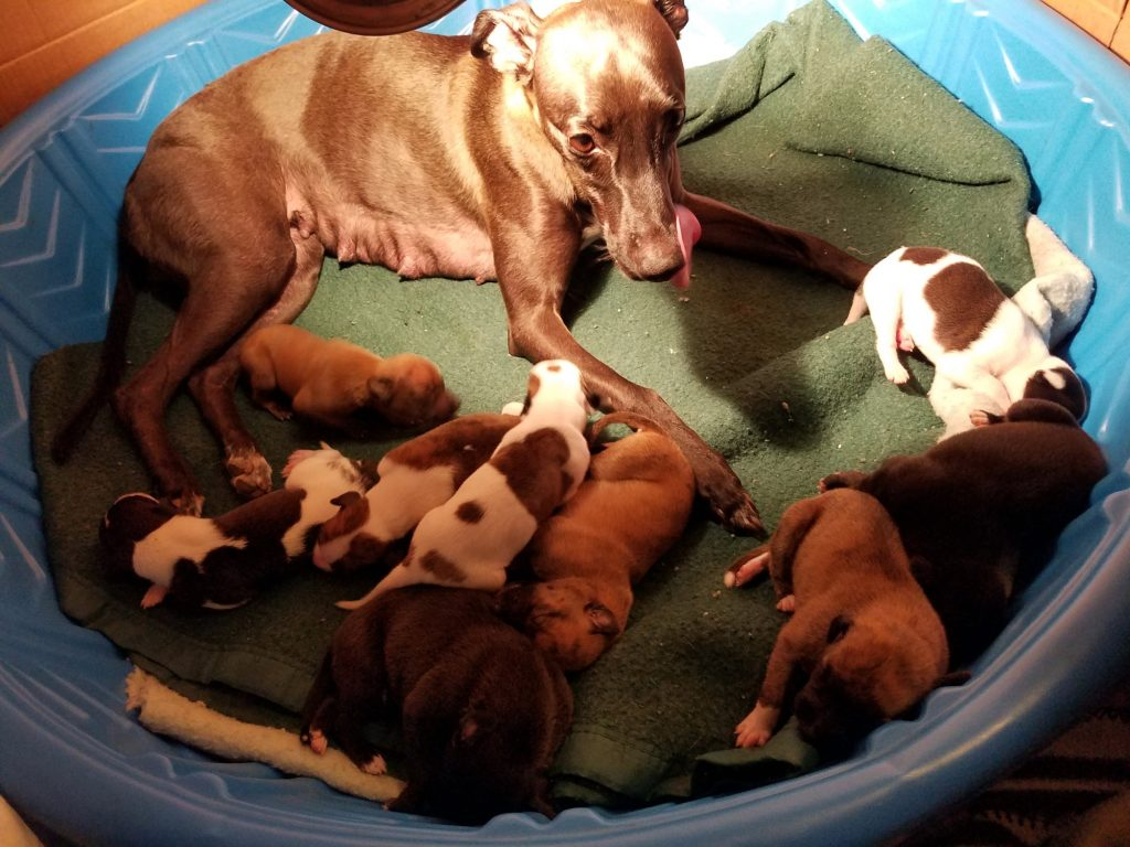 Back in home, sweet pool again with full bellies, 11 days old.