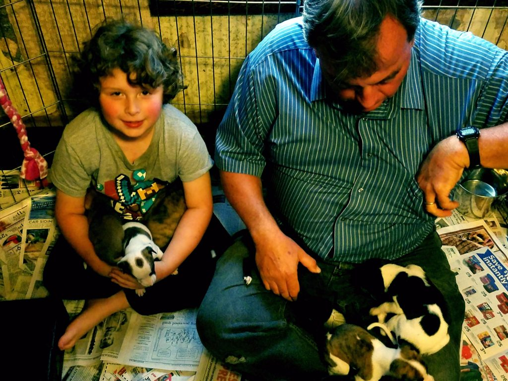 Puppy play time is an important part of their development. Here are Bill and one of our grandsons doing play duty.