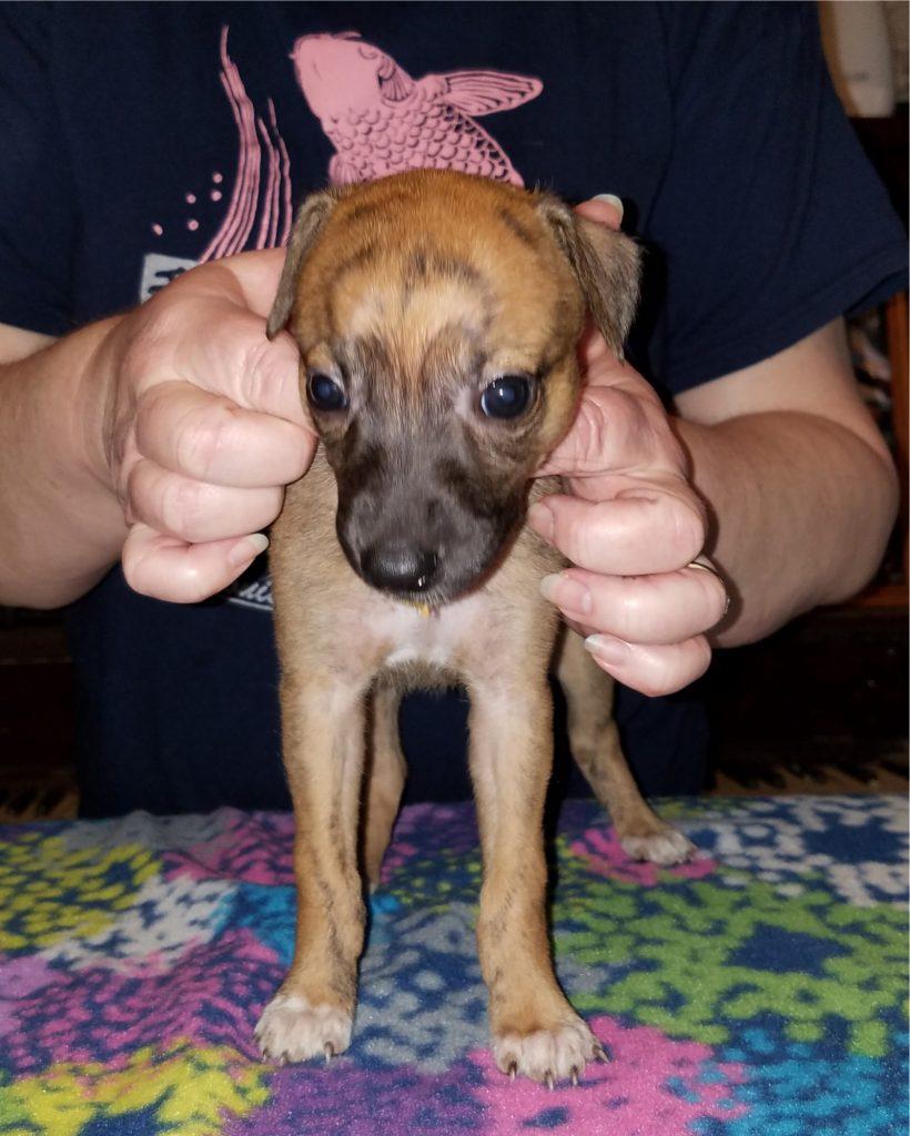 Kanga at 5 weeks