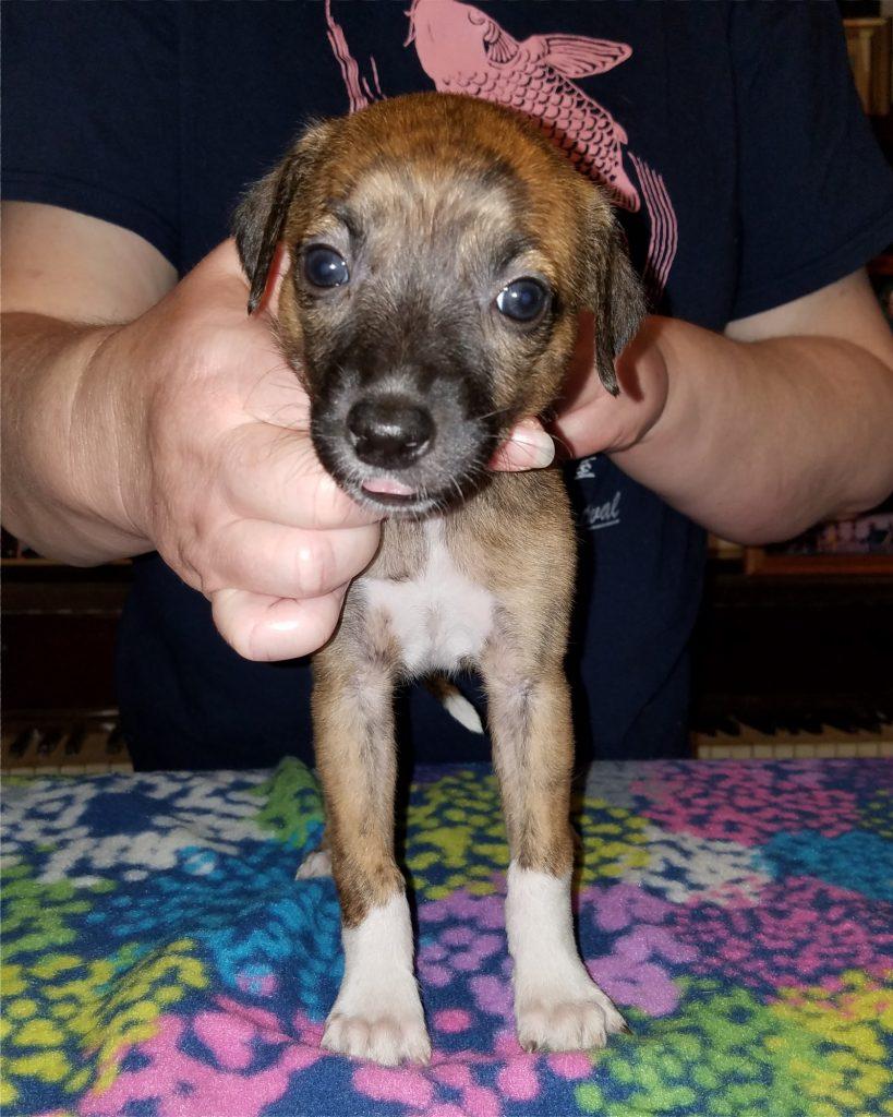 Bootsie at 5 weeks