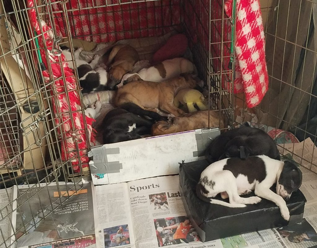 It's getting crowded in the puppy crate as they grow.