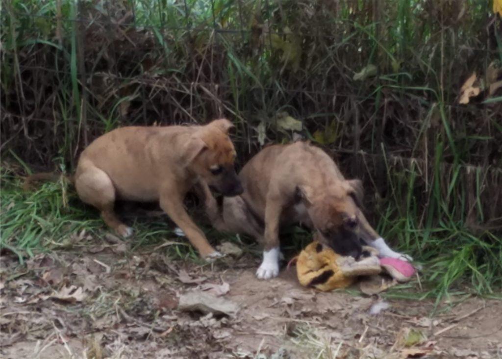 Kanga and Bootsie examine a bedraggled toy