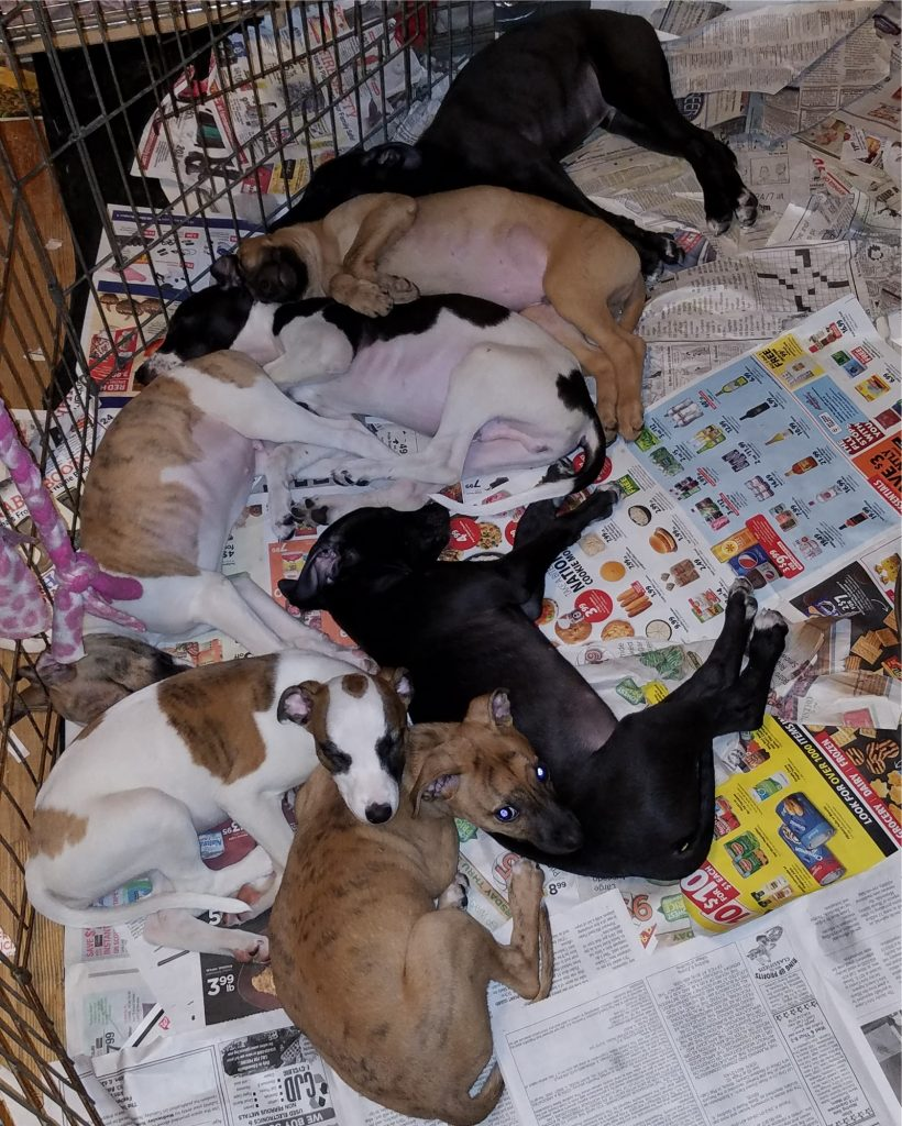 Silly babies piled up on the floor after I had just changed the bed in their crate.