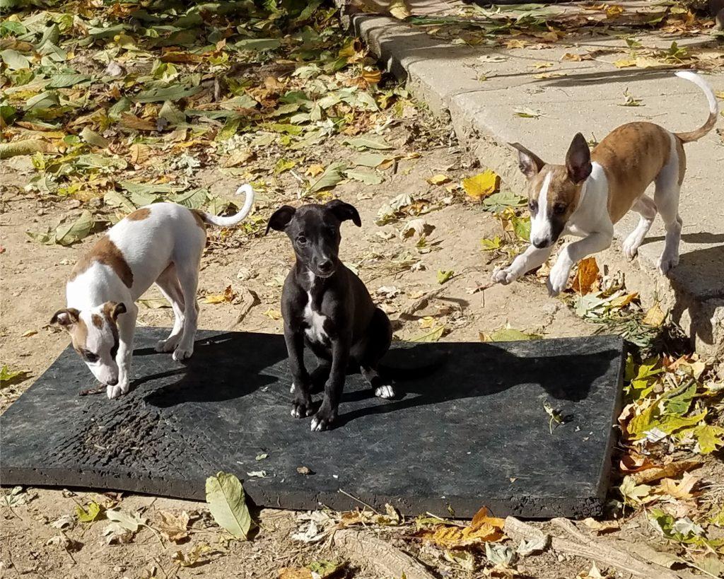 Angel, Crock, and flying Roo
