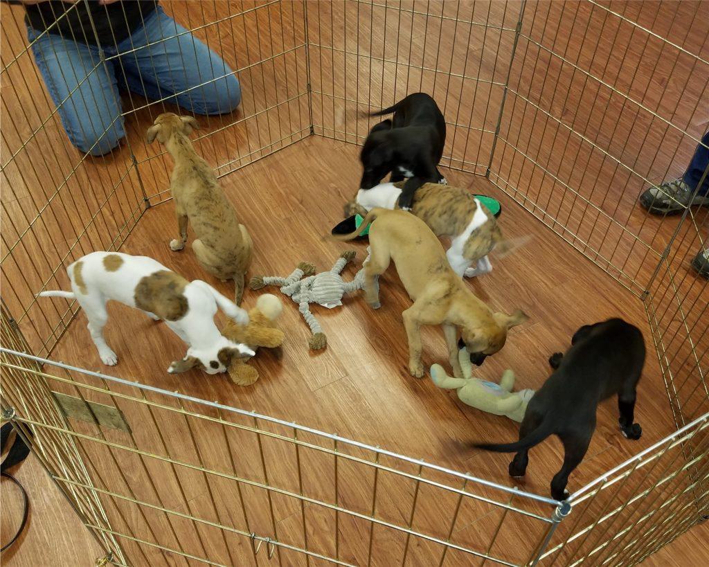 Six pups on another meet & greet.
